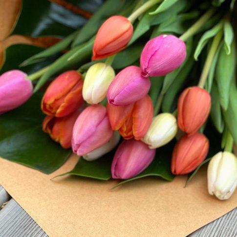 Deluxe Tulip